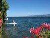Bords du Lac, vus du débarcadère