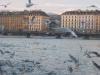 Vol de mouettes, au fond le Pont de la Machine et les quais.