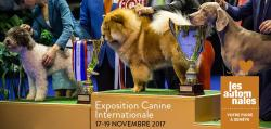 affiche Exposition Canine Internationale 2017
