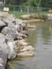 Canards au bords de l'eau
