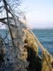 Arbres frigorifiés, vue vers la pointe de Bellerive