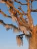 Derniers rayons de soleil pour réchauffer les branches